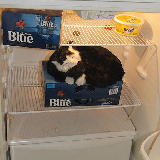 Cat_guarding_the_beer_fridge_Goon_(Box_Wine)_and_Beer_Mix_Goon_Recipe