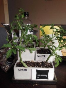 Plants watered with Golden Oak Fruity Lexia
